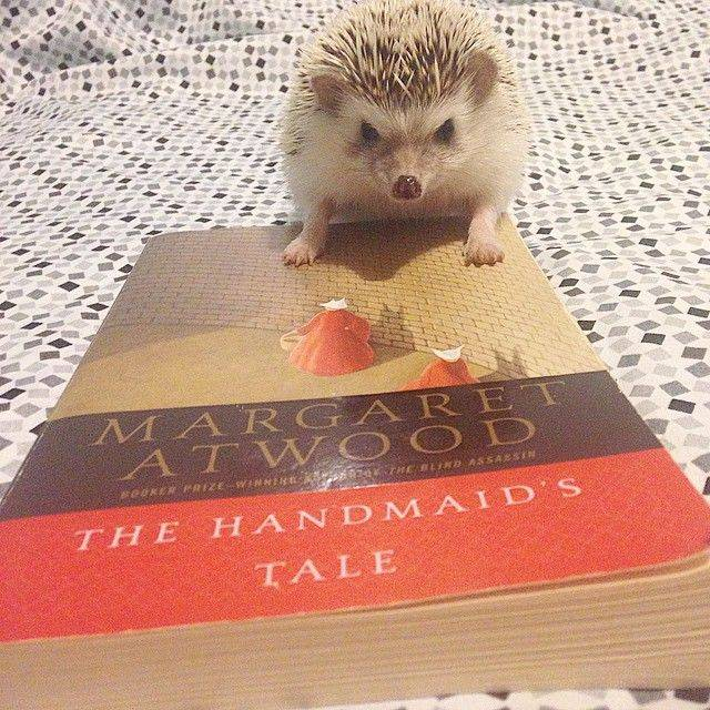 Matilda the hedgehog thought she might give Atwood a try.