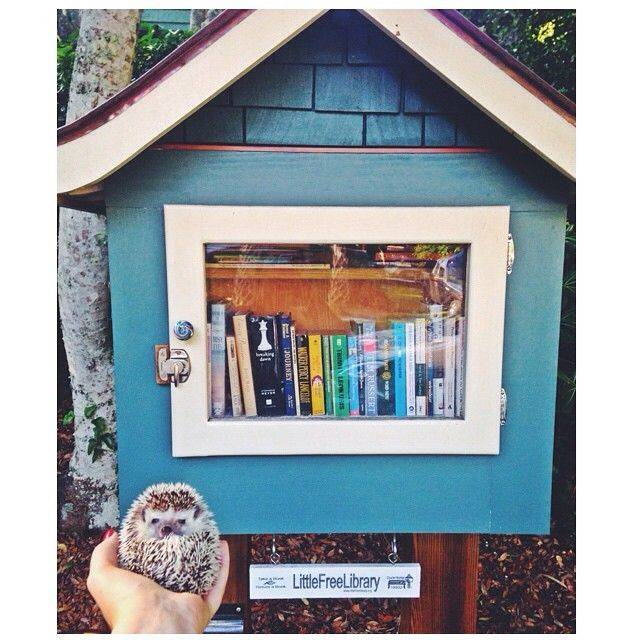 Poppy (@lilpoppybigworld on Instagram) encountered a Little Free Library in Charleston, SC