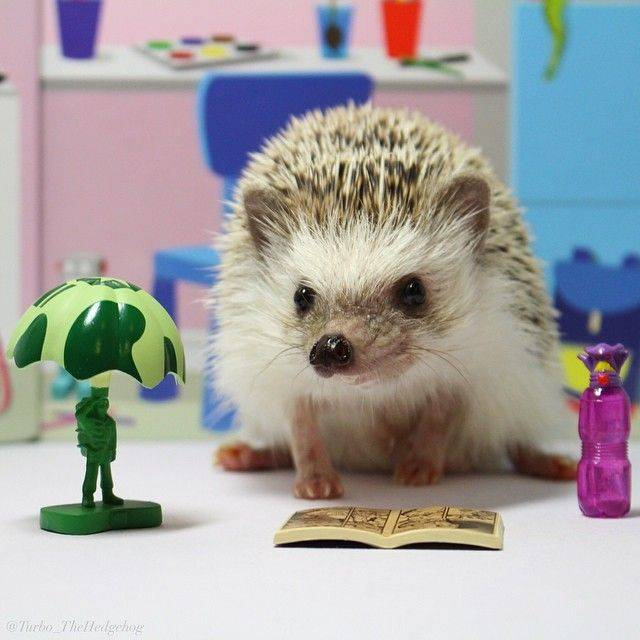 Turbo the hedgehog is an avid fan of comics.