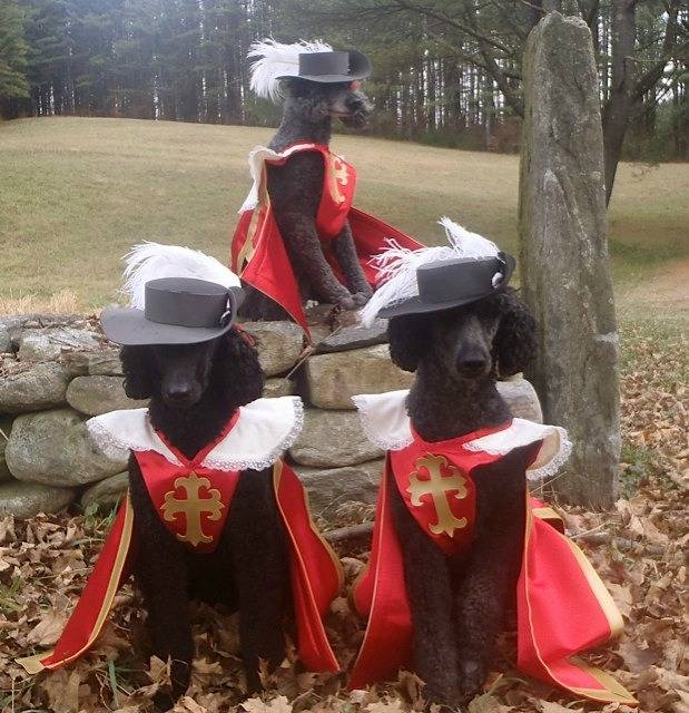 The 3 Dogateers - an all-canine rendition of The Three Musketeers, thanks to these amazing bookish pet costumes.