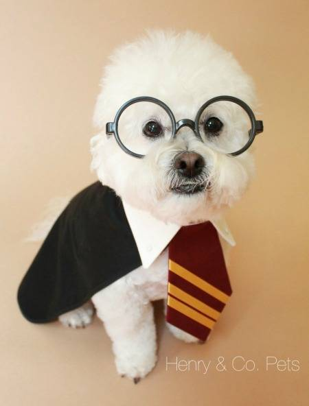 The cutest Boy Who Lived you ever did see. Any dog would be proud to wear this Harry Potter costume.