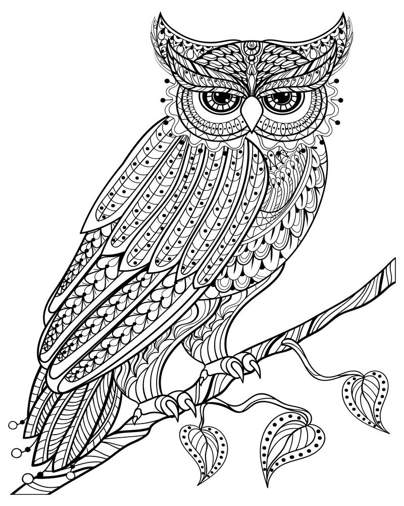 Hand drawn magic Owl sitting on branch for adult anti stress Coloring Page with high details isolated on white background, illustration in zentangle style. Vector monochrome sketch. Bird collection.