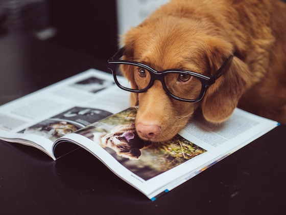 dog wearing glasses with head on magazine