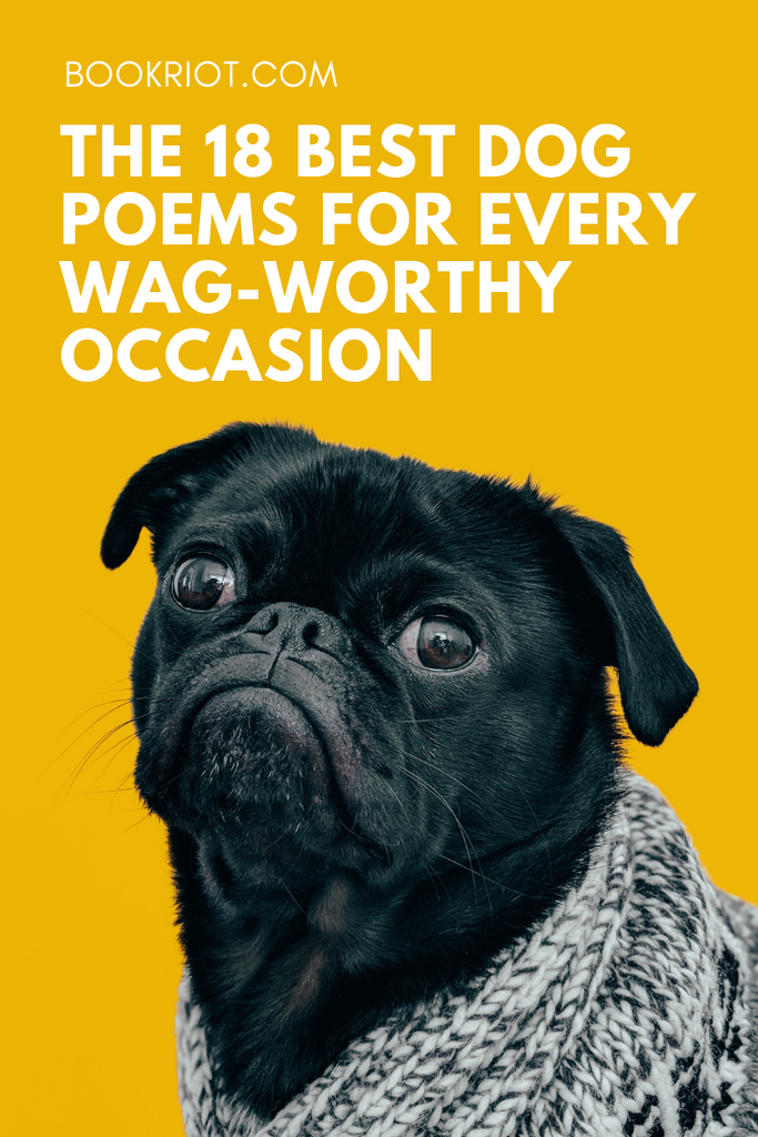 The best dog poems for when you need a reminder of your tail-wagging bestie. dog poems | poems about dogs | dogs | poetry lists | poetry to read